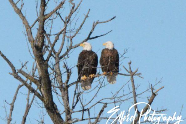 Eagle Part 2