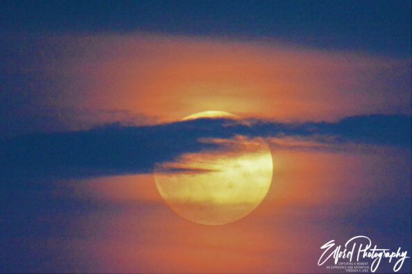 "July's full moon, called the ""Buck Moon"""