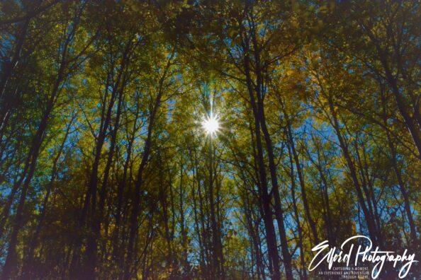 Autumn Color Splendor