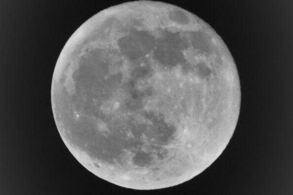 November Beaver Full Moon