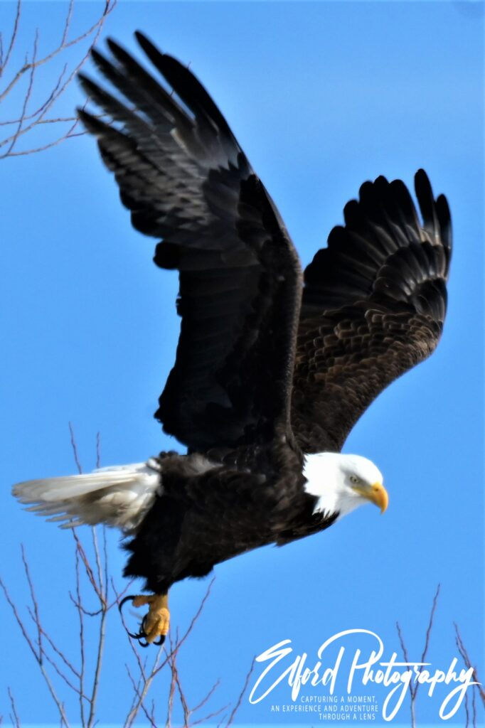 Eagle Eye & Soaring to New Heights