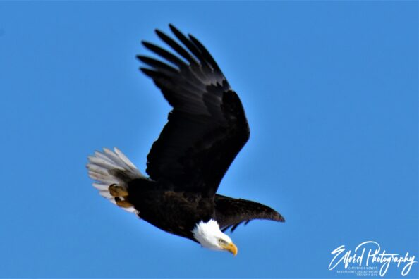 Eagle Eye and Soaring to New Heights