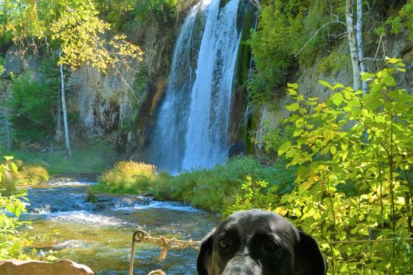Driving Miss Daizy South Dakota Adventure in Spearfish Canyon Falls Area, Custer State   Backhills and the Badlands National Park Part 1